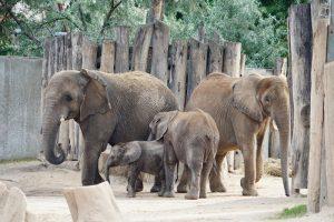 Pori, Elani Tamika und Tana (v.l.n.r.) sind wieder vereint. Foto: Zoo Halle.