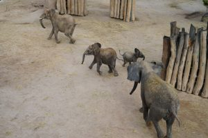 Tana, Elani, Tamika und Pori (v.l.n.r.). Foto: Zoo Halle.