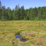 Zu sehen ist das Hirschbäder Moor, ein Moorkomplex aus lebendem Hochmoor mit rotem Torfmoos, stagnierendem Hochmoor und eingestreuten offenen Wasserflächen, den sogenannten Schlenken. Foto: Thomas Sperle.