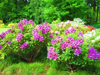 Pflanzen Umwelt Busch Natur