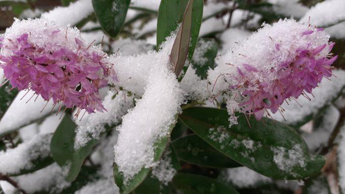 Frühling Schnee