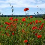Insekten Biodiversität Arten Schutz Klima Blühwiesen Landwirtschaft
