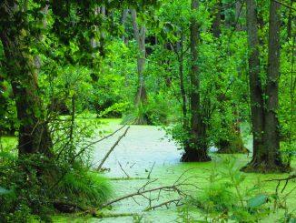 Moor Feuchtgebiet Natur