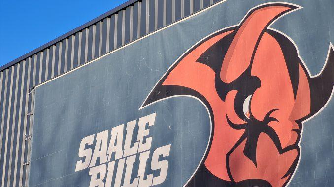 Saalebulls