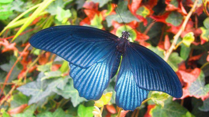 Natur Insekten Artenvielfalt Umwelt