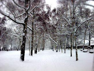 Park Schnee