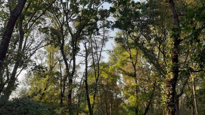 Wald Umwelt Natur