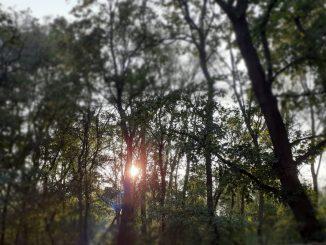 Wald Natur Umwelt Bäume