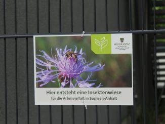 Insektenwiese
